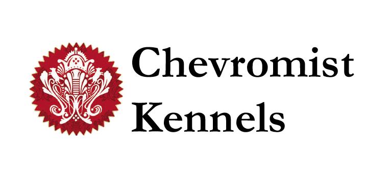 Chevromist Kennels Cavoodles
