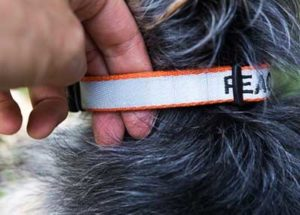 dog collar with 2 fingers